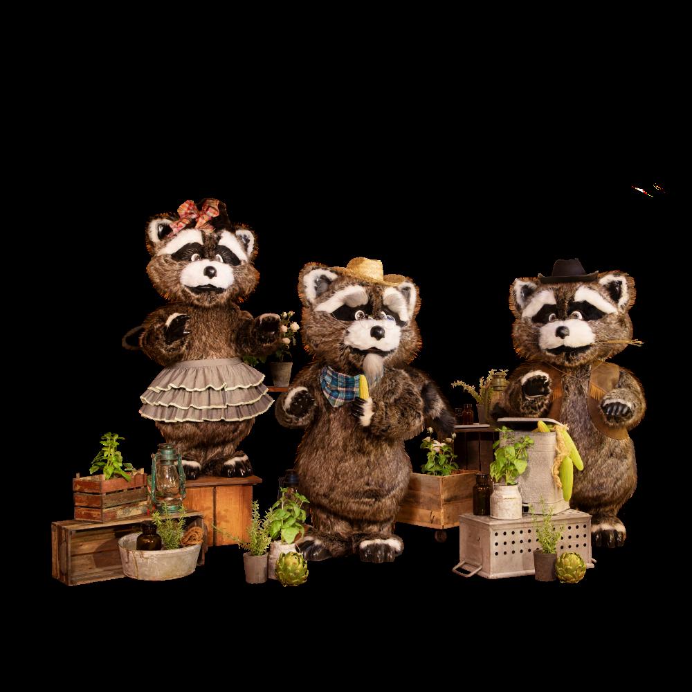 The Western Raccoon Band